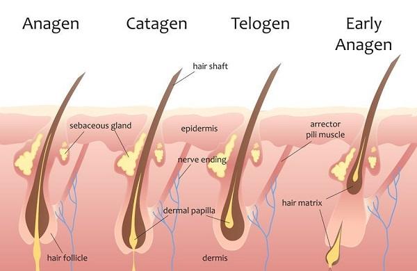 Có nên triệt lông vĩnh viễn không | Giải đáp của các chuyên gia