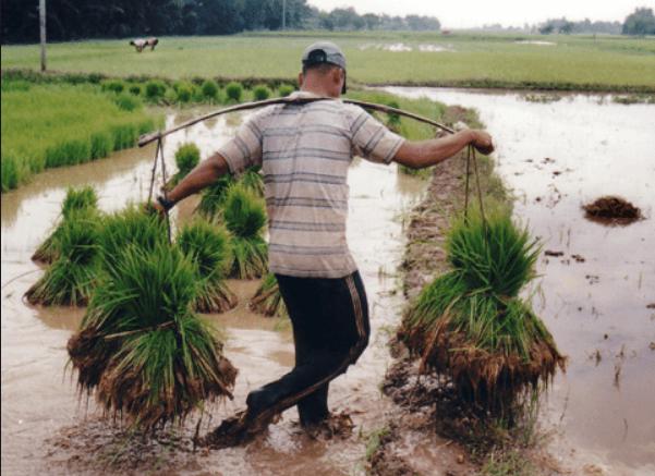 Nỗi khổ của anh nông dân 30 tuổi chưa lấy được vợ vì…rậm lông