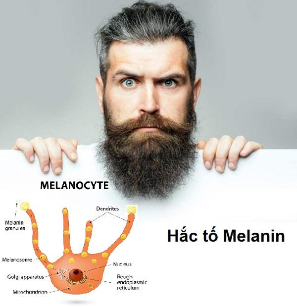 râu bạc sớm, râu bị bạc, râu bạc, râu bạc trắng, trị chứng râu bạc sớm, dấu hiệu râu bạc, cách chữa râu bạc sớm, hiện tượng râu bạc sớm