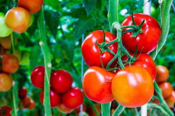 Tẩy lông chân bằng cà chua nếu bạn kiên trì sẽ nhận được hiệu quả bất ngờ
