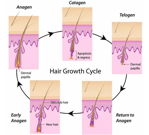 Tại sao triệt lông vẫn mọc lại