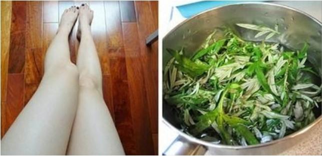 Cách tẩy lông chân bằng lá ngải cứu – Review tẩy lông chân bằng lá ngải cứu webtretho